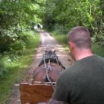 Jaunting Cart Ride in the National Park
