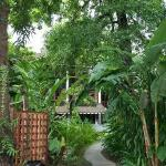 The exotic garden surrounding the rooms