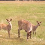 Fabulous Deer Park