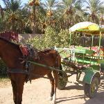 Horse and Cart Trip round Tozeur Oasis