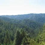 Redwood forests on horseback ride with Ross Ranch