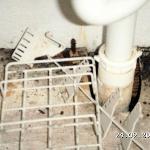 mould under bathroom sink