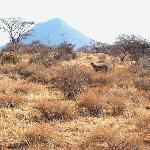 1st day on safari at samburu reserve