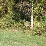 Deer at entrance to nature trail