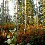 Crescent Lake Hiking Trail
