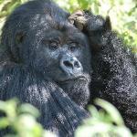 Contemplation - Rwanda
