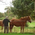 Dad and The Horses