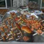 Some of the edible mushrooms found at Storybook Farms woods