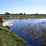 flooding bog for harvest