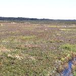 overview photo of cranberry bog