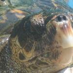Praia do Forte-Turtle sanctury