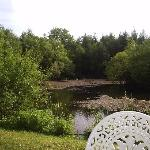 View of the pond in the garden