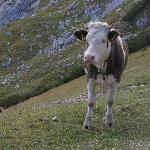 Bilde fra Alpspitz