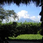 View from the hammock outside the Jaguar Room