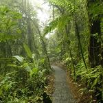 Landscape - Villa Blanca Cloud Forest Hotel and Nature Reserve Photo