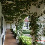 Covered walkway with vines and soft music