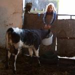 Feeding time for calf