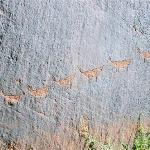Petroglyphs on the canyon walls
