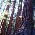Pioneer Yosemite History Center-bild