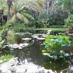 The scenic pond
