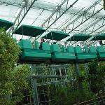 Sky Train that goes thru the Monarch Gardens