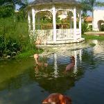 Le magnifique jardin de l'hôtel
