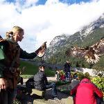 Hohenwerfen Fortress - Birds of Prey Show