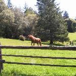 visiting horse-nice paddock