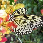 Schmetterlinghaus - Butterfly 1