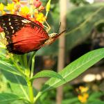 Schmetterlinghaus - Butterfly 4