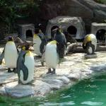 Penguins at the Ueno Zoo