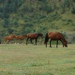 horses grazing at Fish Creek House