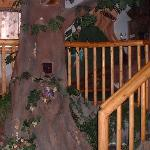 tree with a bid nest in the hollow- near the stairs
