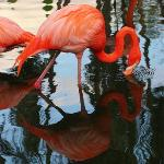 Flamingo Garden - very nice wildlife sanctuary