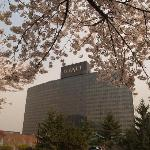 Grand Hyatt in April Cherry blossoms