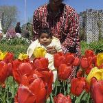 Veldheer Tulip Garden Photo