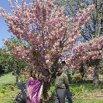 Veldheer Tulip Garden 사진