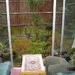 le petit jardin dans notre chambre!