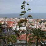 blühender Sisal über Puerto