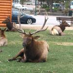 Leader of the pack (or herd) @ Estes Park