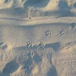 Wildwood's fine white sand.