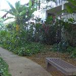 Waikomo grounds