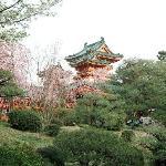 Cherri blossoms at heian Jingu Shrine