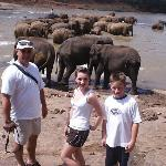 Elephants at Kandy