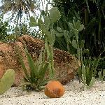 Die Kokosnuß hätte auch dich treffen können :-)