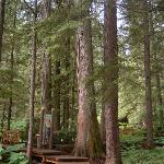 Giant Cedars Boardwalk Trail