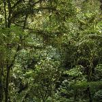 Clour Forest