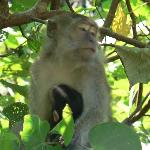 Monkey and baby in Bako National Park, Sarawak