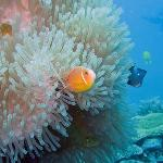 Nice anemone and clown fish while diving