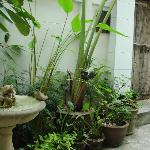 The main entrance to the house. Lots of plants and thankfully no mosquitoes!
